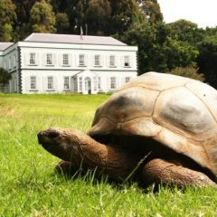 Meet Jonathan: The Legendary 186 Year-Old Gay Giant Tortoise