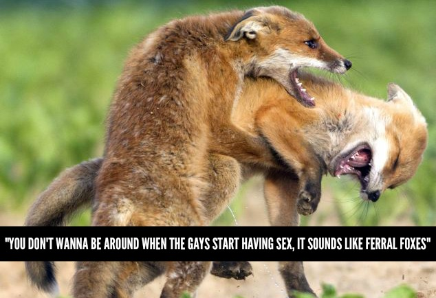 gays-foxes